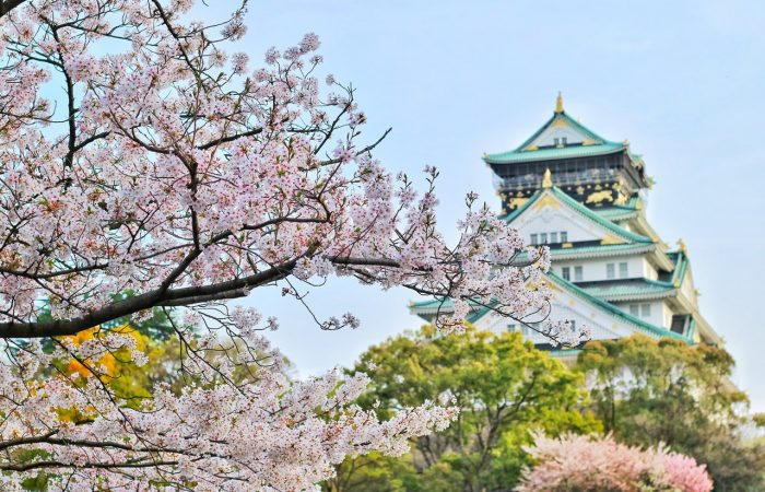 view of a japanese tower and flowered pink cherry trees on the forefront of the image